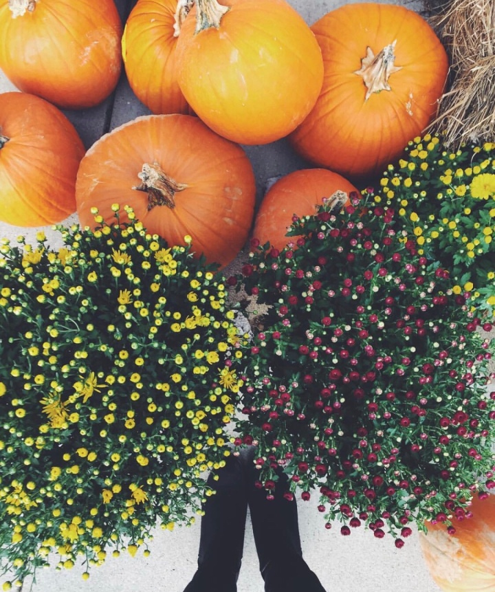 Twenty-five Things to do this Fall! | LexRayn🌻🍂🍃